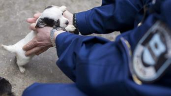 Kutyakereskedőket bírságolt a Nébih
