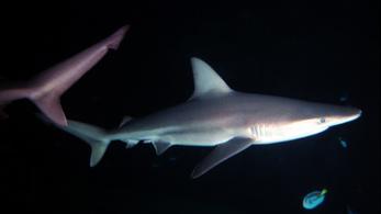Kerti úszómedencéjében tartott cápákkal próbált kereskedni, de lebukott