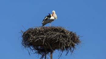 """""""Ha a gólya és a fecske jókor hazajönnek, akkor jó szerencsés időt jeleznek"""""""