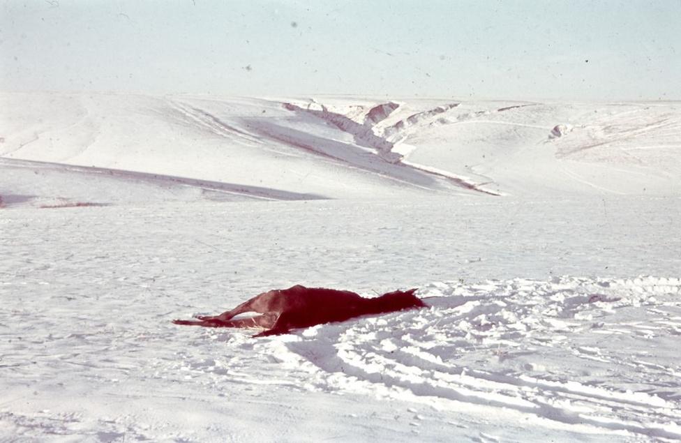 A téli visszavonulás elhullott lóval. A haditúdósítokat még a szovjet áttörés előtt, 1943 decemberében hazarendelték.