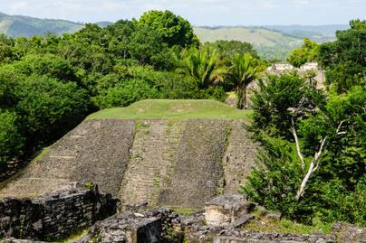 maja város dzsungel nyitó