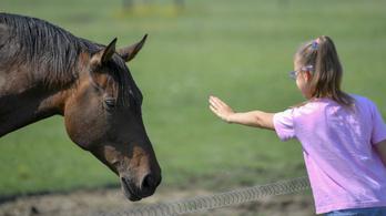 Úgy kell beszélni a lovakhoz, mint a gyerekekhez