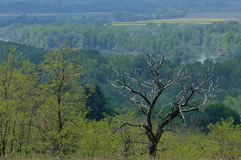 Magyarország 9 gyönyörű erdője mesés túraútvonalakkal: van, ahol vidrákkal is találkozhatsz
