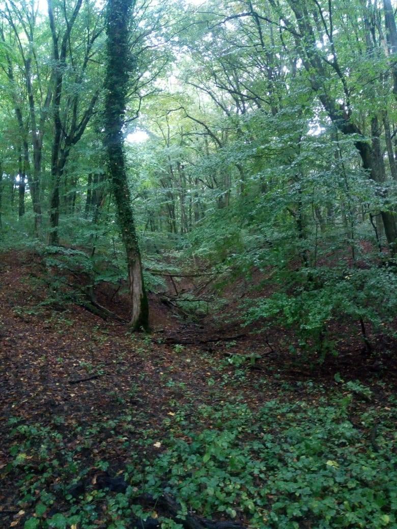 A Mocsoládi-erdő a Natura 2000 védettsége és a Duna-Dráva Nemzeti Park Igazgatósága alá tartozó terület, mely Kisbárapáti, Somogybabod, Vadépuszta és Felsőmocsolád között található. A többségében illír bükkösökkel és gyertyánosokkal borított térségben vidrák, vörös hasú unkák és mocsári teknősök élnek. Sokan összetévesztik az Alsómocsoládi parkerdővel, ahol tanösvények is találhatóak, de az jóval messzebb terül el a vidéktől.