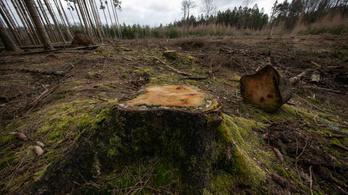 Összefüggés lehet a fakitermelés és a járványok kialakulása között