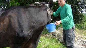 Tíz éve gondoskodik a Fukusimában hagyott állatokról egy japán férfi