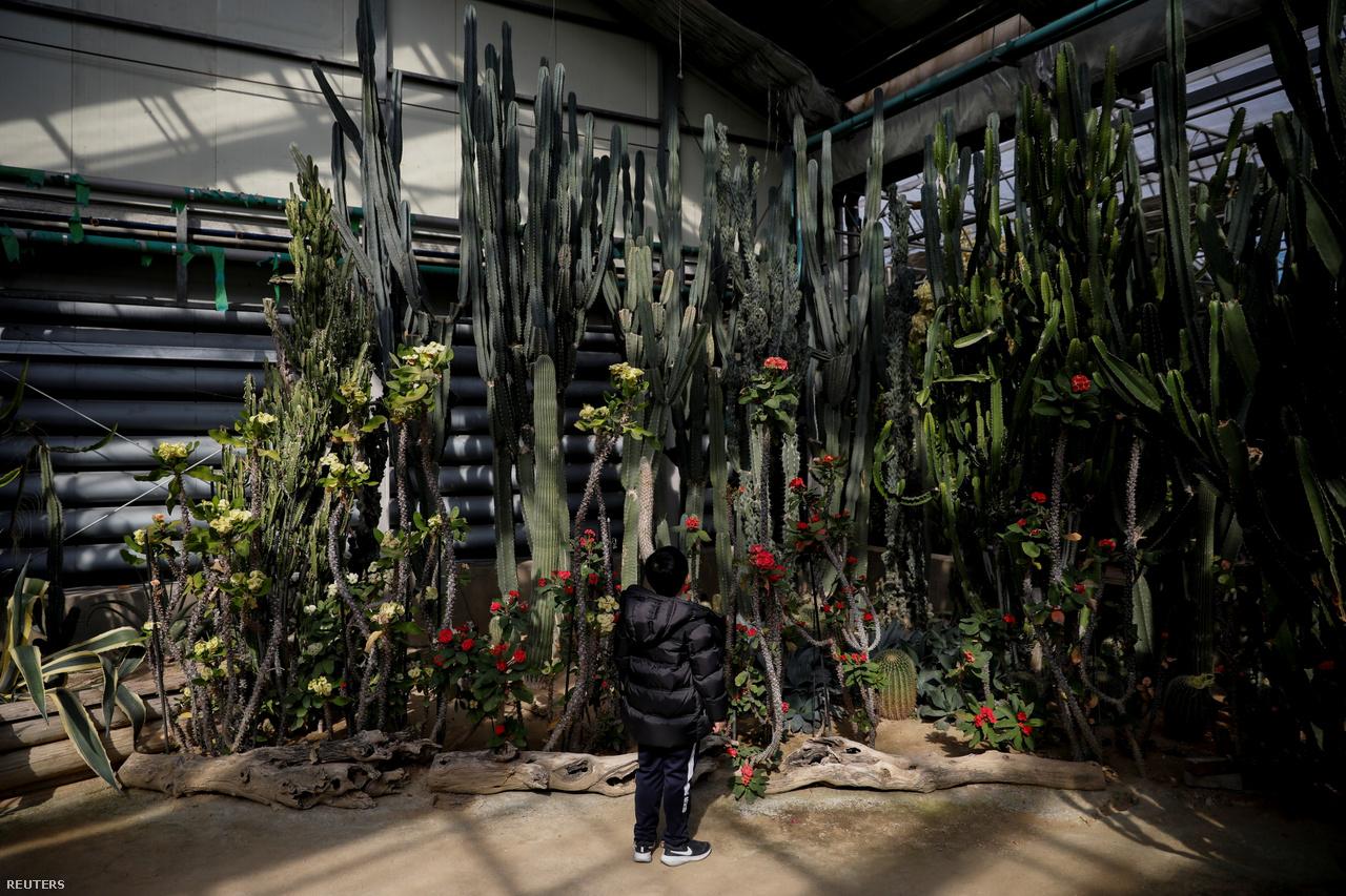 Kirándulás a szöuli botanikus parkban. A gyerekek nem rajonganak a nagyvárosért, mivel ott túl nagy a forgalom és szokatlan a zaj. A kaktuszok között azért elvannak. 2021. február 23-a.
