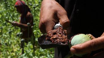 Ha más nem is, a kábítószeripar virágzik Afganisztánban