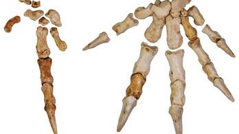 Fára mászó kenguruk maradványait fedezték fel Ausztráliában