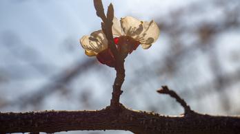 Hamisítatlan tavasz lesz, de közeleg a hidegfront