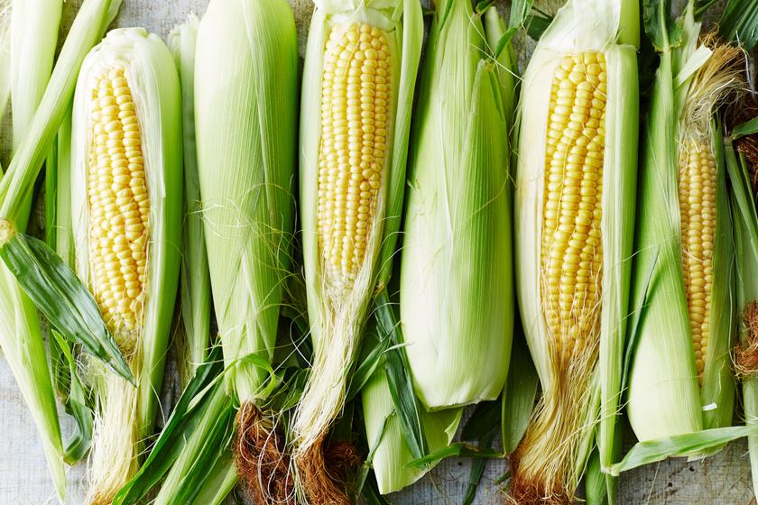 Főtt kukorica még sosem készült el ilyen gyorsan: 5 perc és eheted is