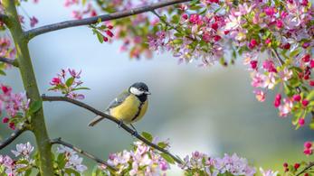 Németh Lajos bejelentette, hogy végre itt a tavasz