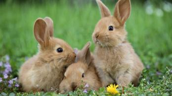 Húsvéti nyuszi: venni vagy nem venni?