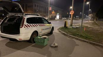 A polgárőrök segítettek világra egy kisbabát az újpesti utcán