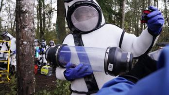 Gyilkos lódarazsak tizedelik Észak-Amerika méhállományát