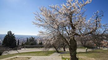 Itt a tavasz, de még mínusz 3 fok is lehet