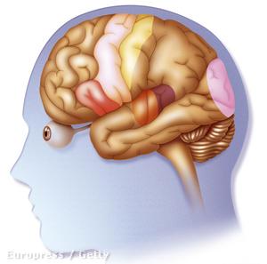 Vörös színnel jelölve az agy Broca területe