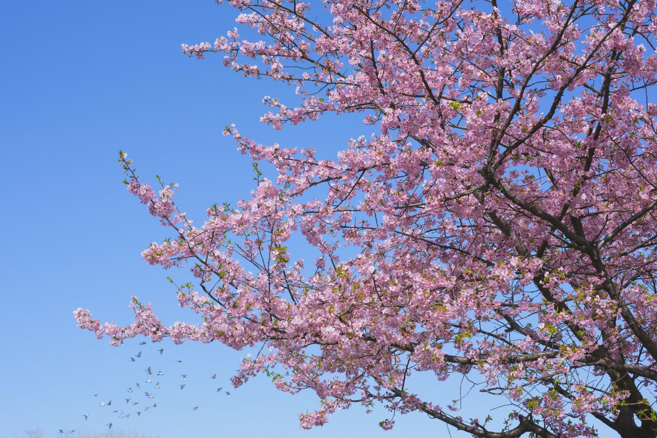 tavasz-időjárás2