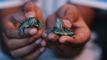 Teknőscsempészt fogtak Ecuadorban