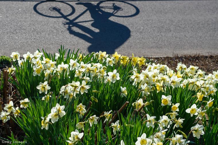És mivel jött még egy pár kép erről a bizonyos német tavaszról csodás virágokkal, nézzünk még belőlük párat a biciklisrendőröktől függetlenül, csak úgy, hátha jobb kedvünk lesz tőlük!