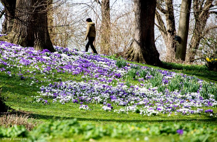 Egy virágmező az Alsó-Szászországban található Jeverben.