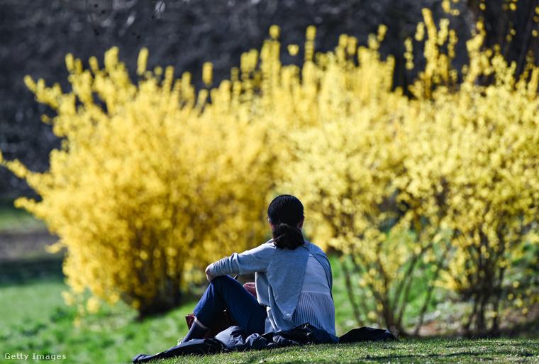 Például így üldögélt valaki napfürdőzve Frankfurtban az aranyfacserjék mellett.