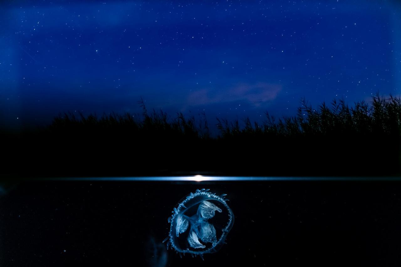 Medúzák éjszakája - Duna–Dráva Nemzeti Park