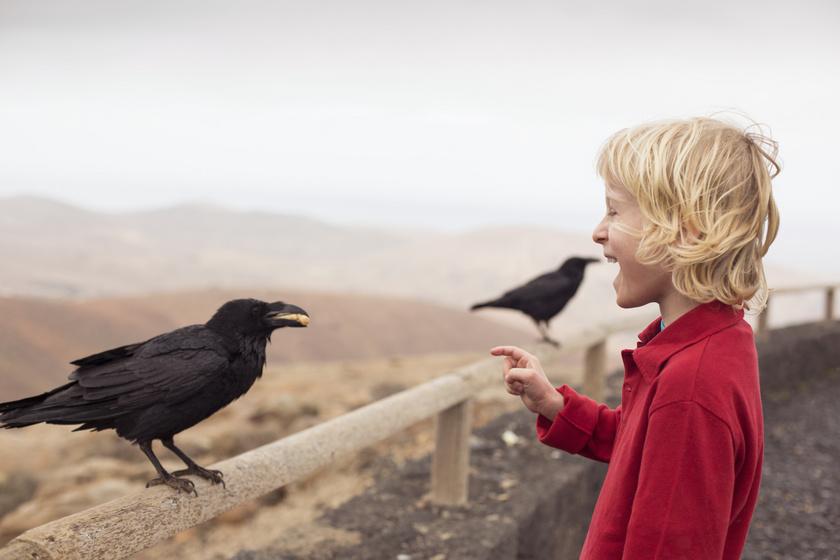 A varjak rendkívül okos állatok, megtanultak együtt élni az emberekkel. Bár olykor kifejezetten harciasan tudnak fellépni, a megfigyelések szerint emlékeznek azokra a személyekre, akikkel korábban kapcsolatba léptek, és velük barátságosabban viselkednek. Ha úgy érzékelik, hogy valaki veszélyt jelenthet a számukra, a társaikat is figyelmeztetik.