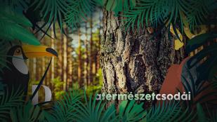 A fák igazi közösségi lények: kommunikálnak, segítik egymást, és persze versengenek is