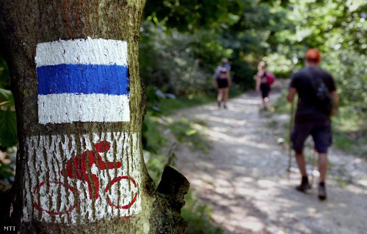 Belföldi turisták haladnak az Országos Kéktúra útvonalán a Kis-Kevély-hegy oldalában.