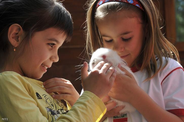 Kisnyulat simogatnak gyerekek a Fővárosi Állat- és Növénykert Parasztudvarában 2014. április 18-án