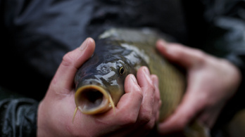 A nagy halakba ültetett csipek buktathatják le az orvhalászokat