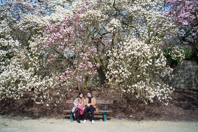 Brüsszelben van a Laeken Park, ott készültek ennek a minigalériának a képei