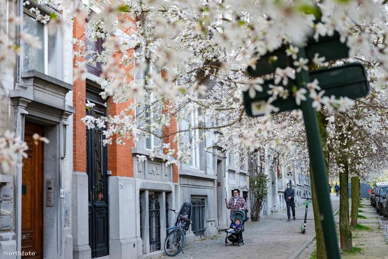 A környező utcák fái is virágba borultak