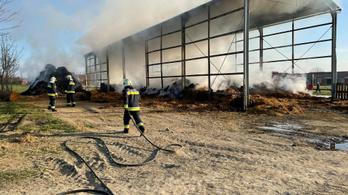 Fotók: hatalmas lángok pusztítóttak egy gércei mezőgazdasági telepen