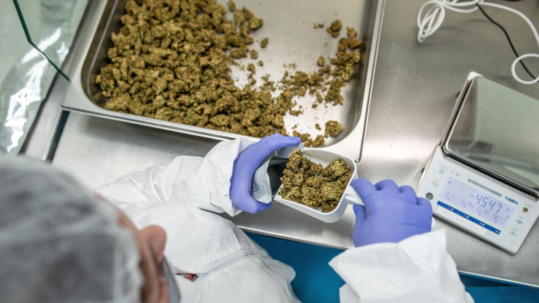 Már csak Magyarország szerint veszélyes drog az orvosi kannabisz