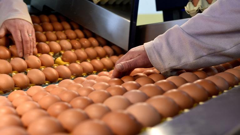 Szájbarágó az Indexen: nem járkálunk tojásokon