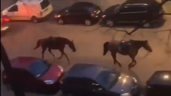 Meglógott két ló Brüsszelben, miközben illegális bulit oszlattak a rendőrök