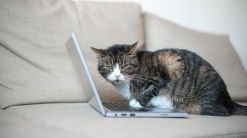Ha mindig is szeretett volna macskametálra headbangelni, eljött az idő