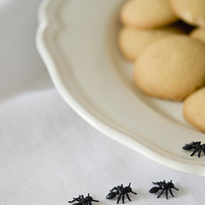 7 bevált házi praktika, hogy száműzd a hangyákat a konyhádból: természetes megoldásokat mutatunk