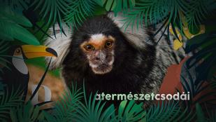 Ezek a majmok kihallgatják a szomszédaikat, hogy beskatulyázzák őket