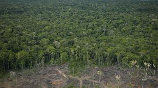Drámaian fogy a dzsungel az Amazonasnál