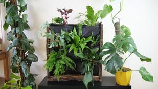 Miért jó a növényfal, és hogy lehet házilag elkészíteni?