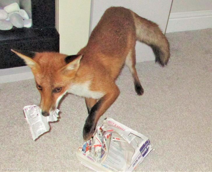 tk3s swns fox friend 010