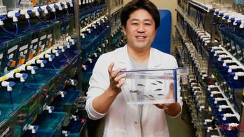 Szívgyógyító gént találtak