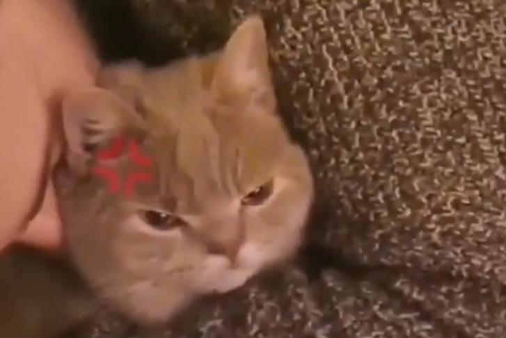 macska.png