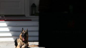Túl harapós a Biden házaspár kutyája, pótkiképzésre viszik