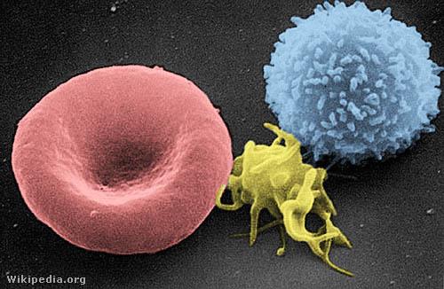 Vörösvértest, vérlemezke és T-limfocita (színezett elektronmikroszkópos felvétel)