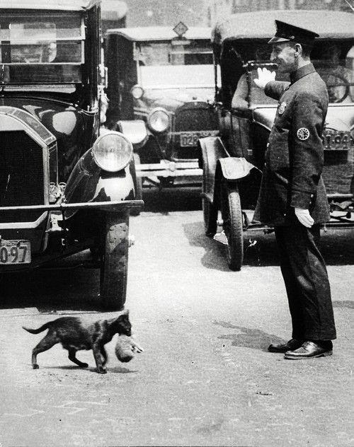 1925 júliusában Harry Warnecke, a New York News fotósa lefényképezett egy rendőrt, aki megállította az autókat, hogy egy macska és kölykei átkelhessenek az utcán.