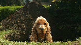 Így szoktasd le a kutyádat a legkárosabb viselkedésekről!